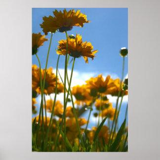 Fleurs jaunes posters