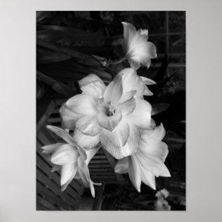 Fleurs noires et blanches de photographie posters