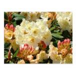 Fleurs oranges crèmes jaunes de Rhodies Rhododendr Carte Postale