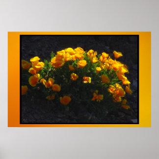 Fleurs oranges de pavot poster