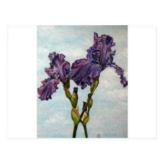 Fleurs pourpres d'iris barbu carte postale
