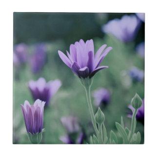 Fleurs pourpres sensibles de lavande petit carreau carré