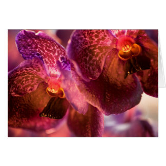 Fleurs pures de cire de Vanda d'orchidée Carte De Vœux