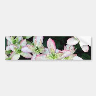 Fleurs roses. Clematis. Autocollant Pour Voiture