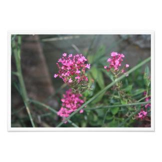 Fleurs roses dans un pré photo d'art