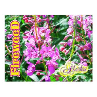 Fleurs roses de Fireweed en Alaska Carte Postale