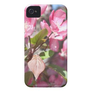 Fleurs roses de fleur de ressort coque iPhone 4