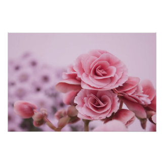 Fleurs roses sensibles posters