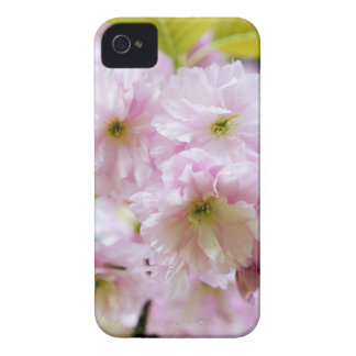 Fleurs roses sur le cerisier japonais dans la coques iPhone 4 Case-Mate