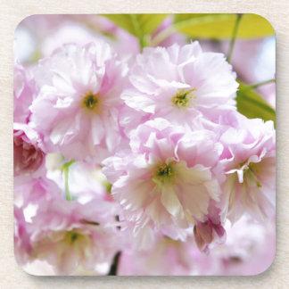 Fleurs roses sur le cerisier japonais dans la sous-bock