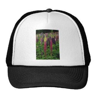 Fleurs rouges de lupins casquette