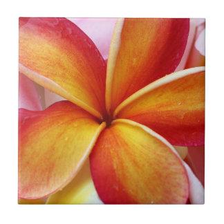Fleurs rouges jaunes d'Hawaï de Frangipani de Petit Carreau Carré