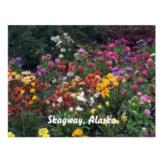 Fleurs sauvages, Alaska Carte Postale
