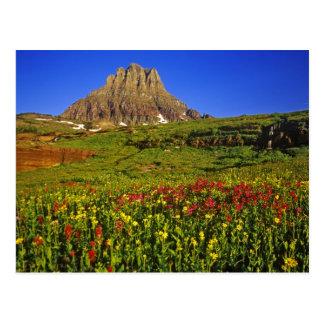 Fleurs sauvages alpins au passage de Logan en Carte Postale