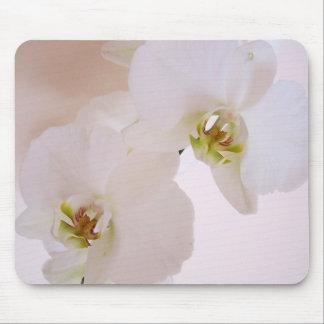 Fleurs sauvages blanches d'orchidée de tapis de souris