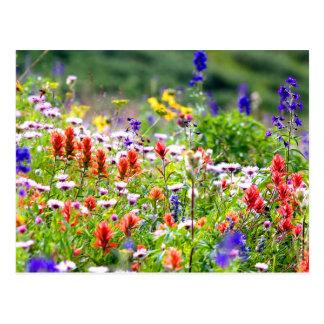 Fleurs sauvages cartes postales