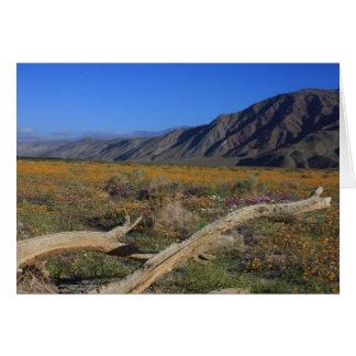 Fleurs sauvages de désert de Borrego Springs Carte De Vœux
