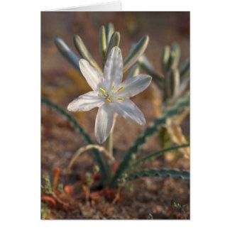 Fleurs sauvages de lis de désert cartes