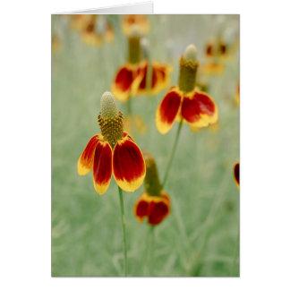 Fleurs sauvages du Texas de casquette mexicain Carte De Vœux