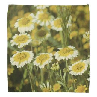Fleurs sauvages jaunes et tournesols blancs bandanas