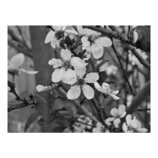 Fleurs sensibles 3623 affiches