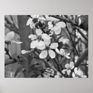 Fleurs sensibles 3623 poster