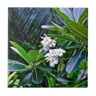 Fleurs tropicales de Plumeria Petit Carreau Carré