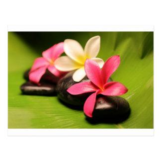 fleurs tropicales de plumeria sur des pierres cartes postales
