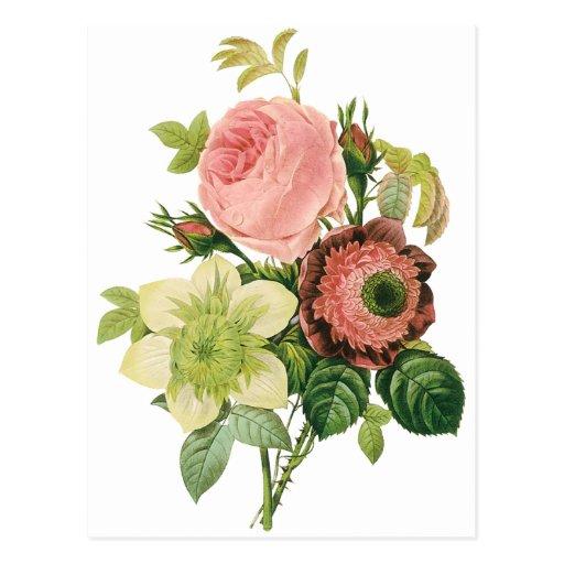 Fleurs vintages, clématite de roses d'anémone par  cartes postales