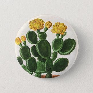 Fleurs vintages de cactus, usines succulentes de pin's