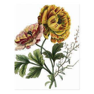 Fleurs vintages de pavot cartes postales