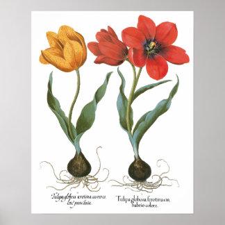 Fleurs vintages de tulipe de ressort par Basilius Posters