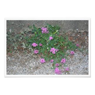 Fleurs violettes photos