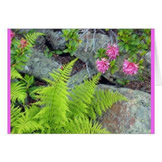 """""""Flora alpine """" Cartes"""