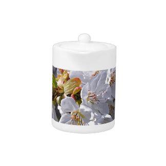 Floraisons de pomme blanc au printemps