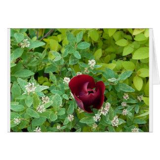 Floral Carte De Vœux
