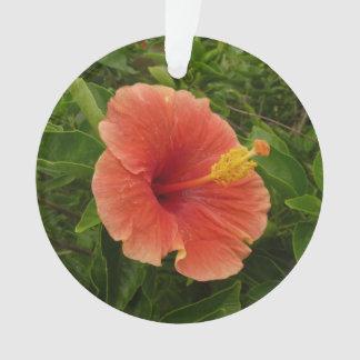 Floral tropical de fleur orange de ketmie