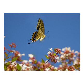 Flottement de papillon cartes postales