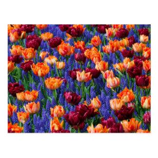[FLOW-003] Gisement de fleur Carte Postale