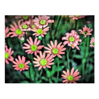 Flower revitalize carte postale