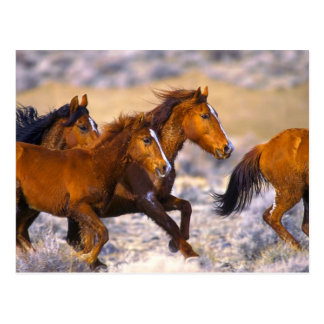 Fonctionnement de chevaux carte postale