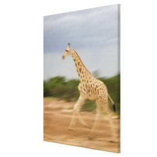Fonctionnement de girafe, vue de côté (mouvement toiles