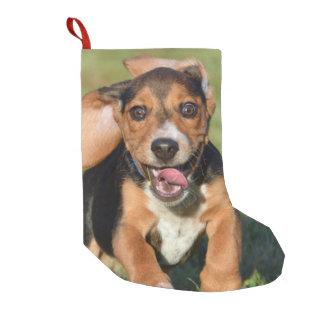 Fonctionnement fou de chiot de beagle petite chaussette de noël