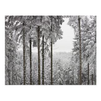Forêt à feuillage persistant en hiver carte postale