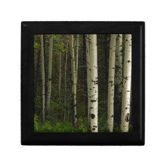 Forêt blanche boîte à souvenirs