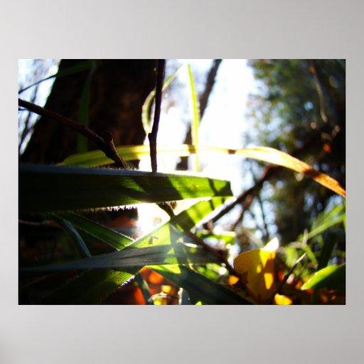 Forêt brillante posters
