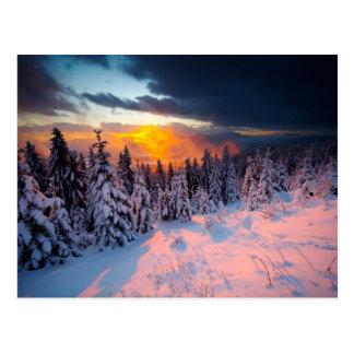 Forêt d hiver carte postale