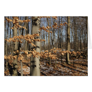 Forêt d hiver du Michigan Cartes De Vœux