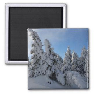 Forêt d hiver aimants pour réfrigérateur