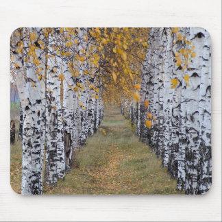 Forêt de bouleau de la Finlande Tapis De Souris